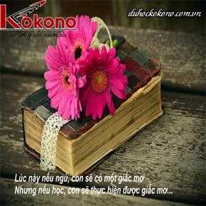 Kokono Cần Tuyển Gấp CTV phiên Dịch Tiếng Nhật ở Bến Tre